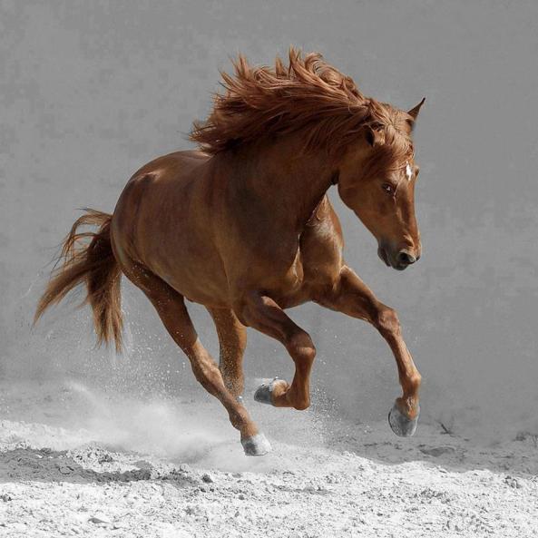 planet caballo